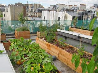 Un-jardin-pour-toit1-1